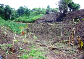 Property For Sale: Agriculture Farming Land For Sale Ref GSCVFL
