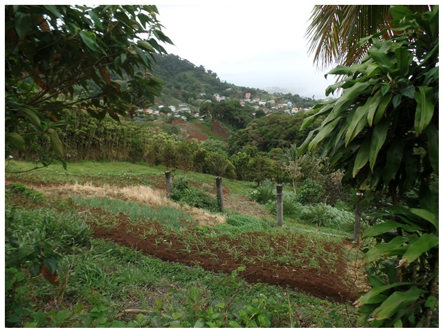 Property For Sale: Agriculture Land For Sale Bowood Green Hill RefDDGHL296